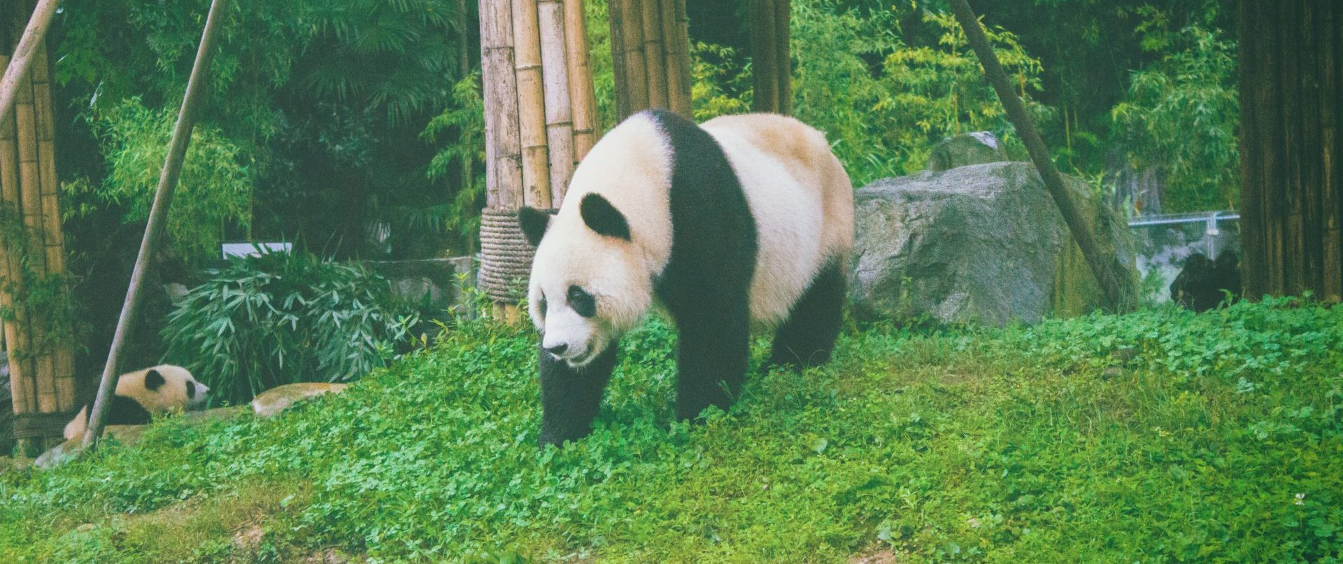 panda on grass field